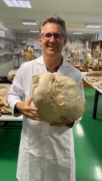 Professor Athelson segura um coração de elefante plastinado no laboratório da Universidad de Murcia